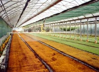 irrigation in greenhouses